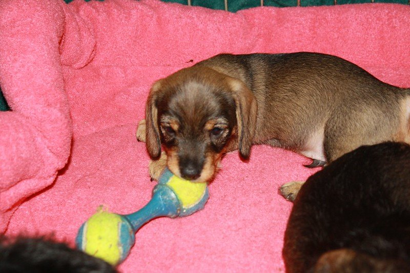 1 Puppy Chewing