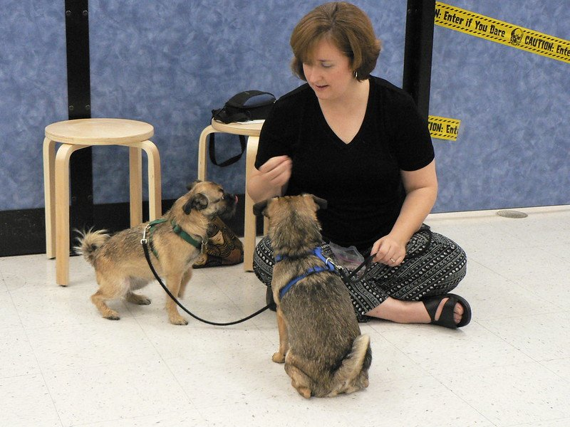 5 Obedience Classes