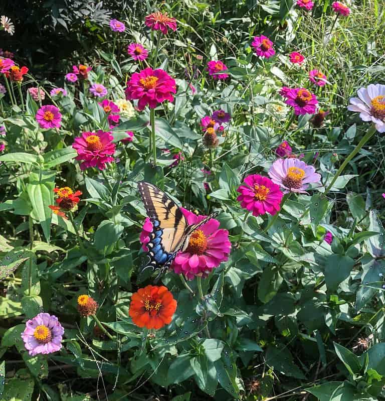 1 Butterfly Garden
