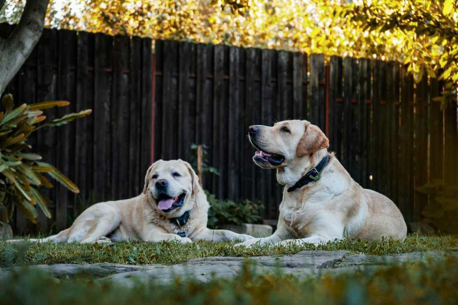 2. Dogsenjoygarden