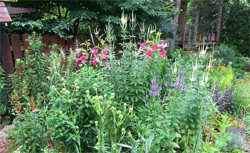 6 Full Sun Perennials