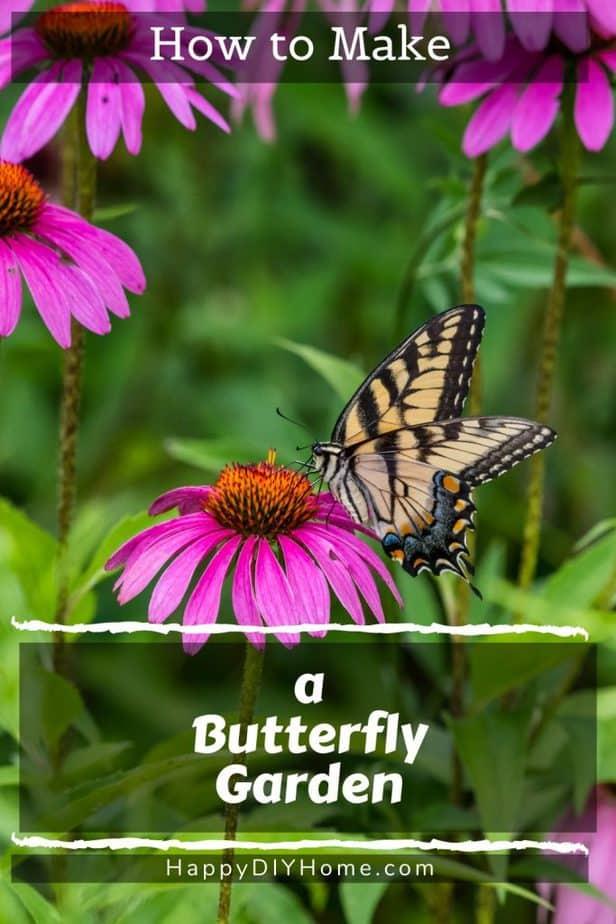Buttterfly Garden 1