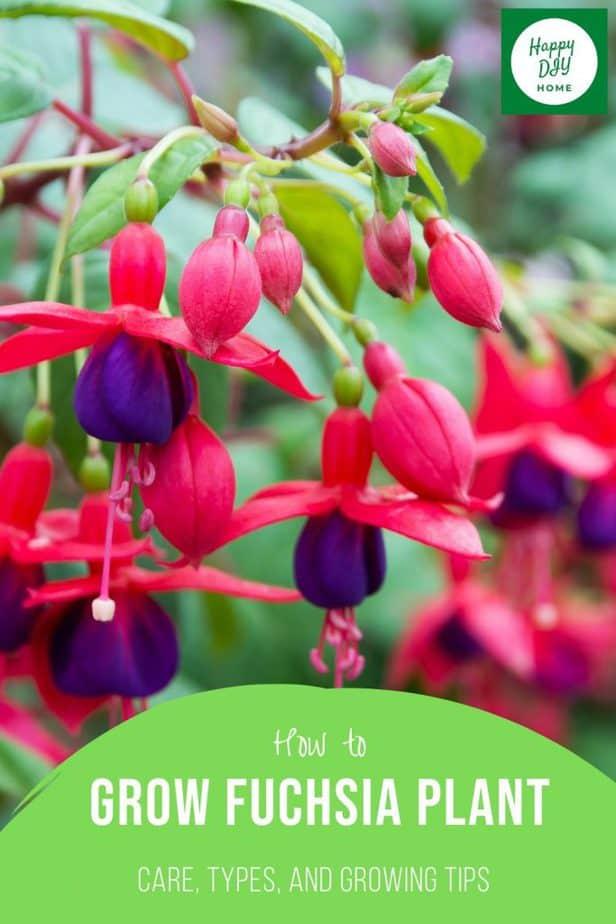 Fuchsia Plants 2