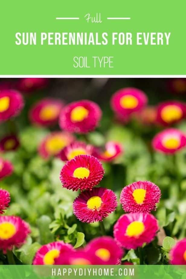 Full Sun Perennials 1