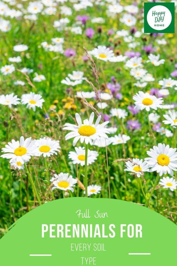 Full Sun Perennials 2