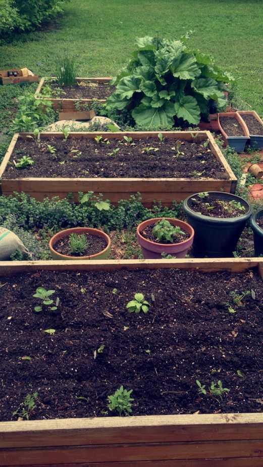 Garden3