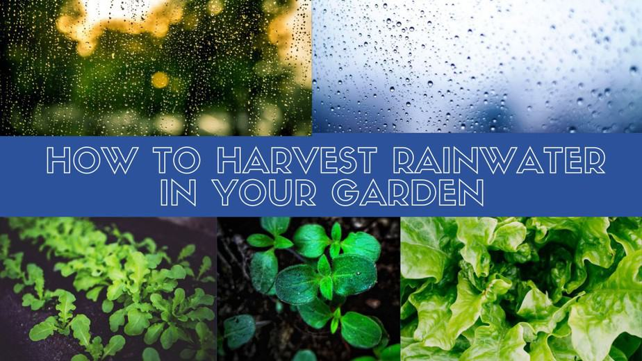 How To Harvest Rainwater