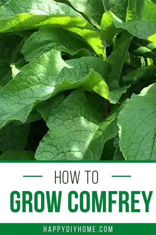 How to Grow Comfrey