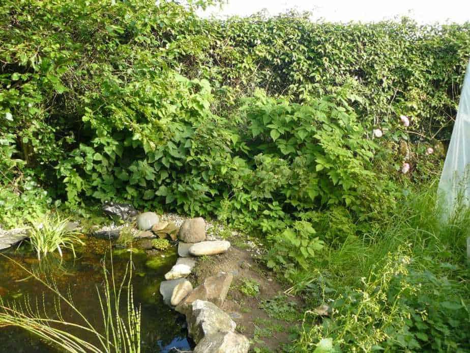 Wildlife Pond 2