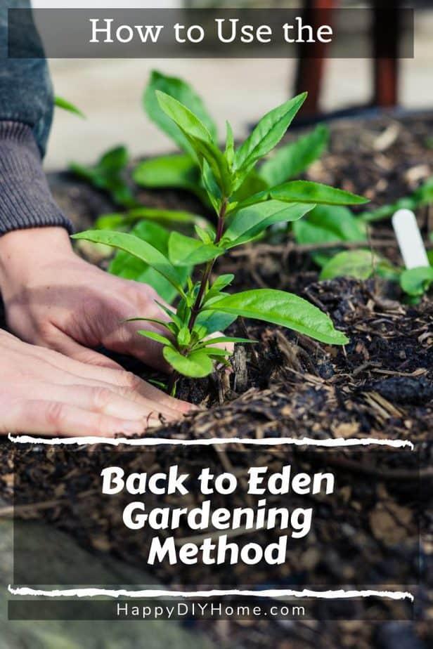 Back to Eden Gardening 1