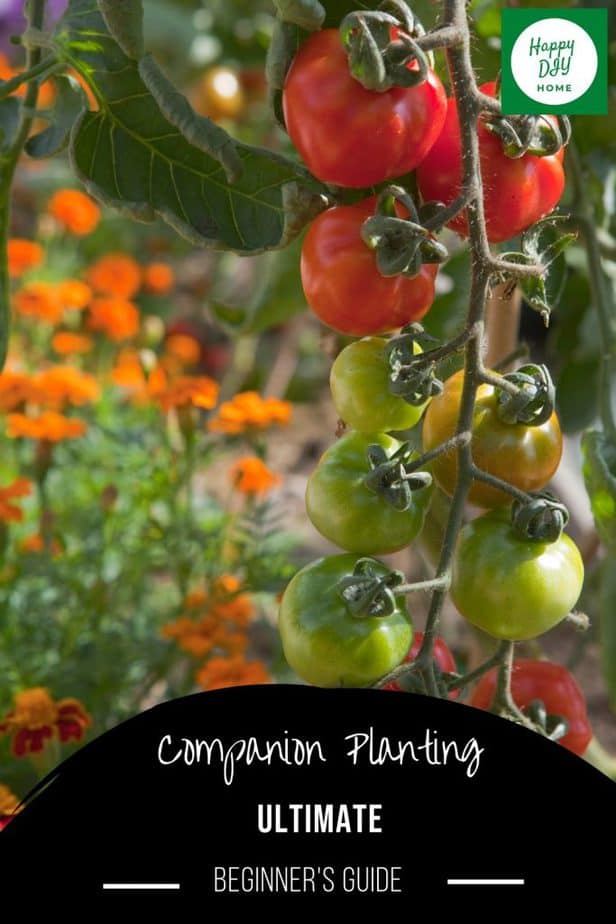 Companion Planting 2