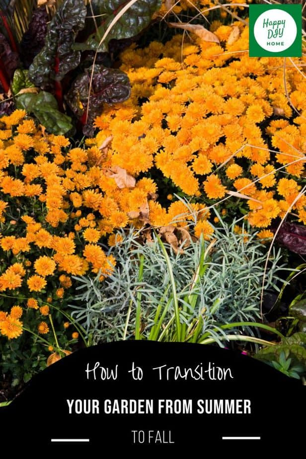 Garden Transition 2