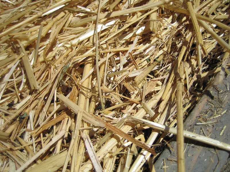 2 Straw Mulch