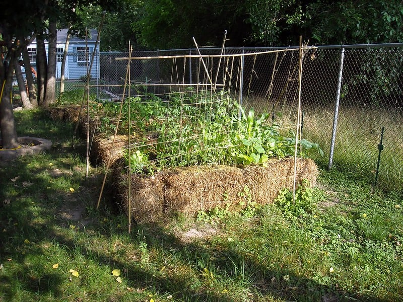 3 Straw Bale Gardening