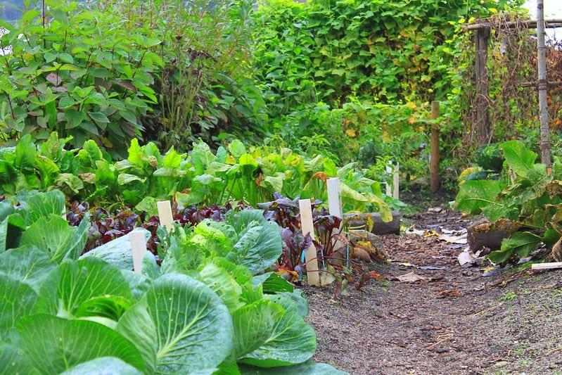 4 Thriving Garden