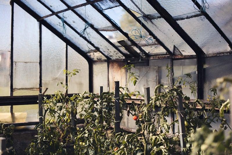 5 Glass Greenhouse