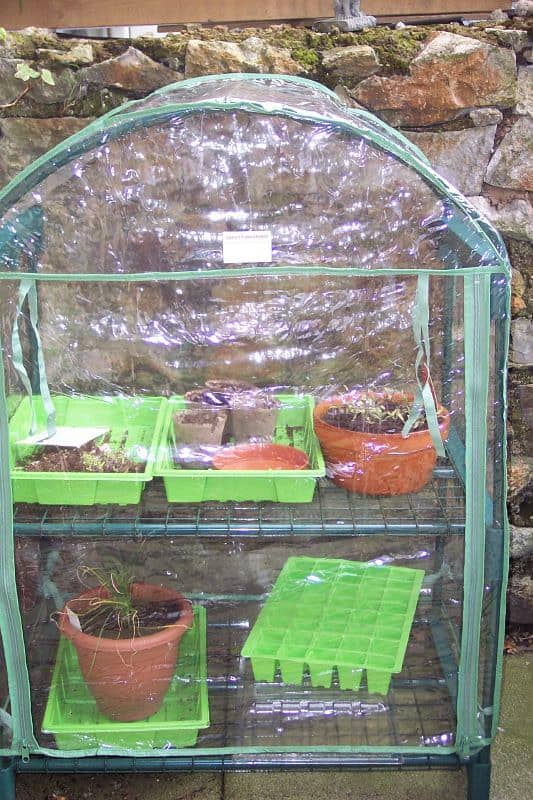 6 Mini Greenhouse