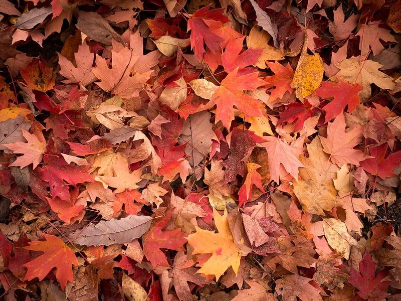 7 Leaf Mulch