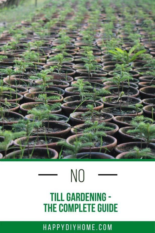 No Till Gardening 1