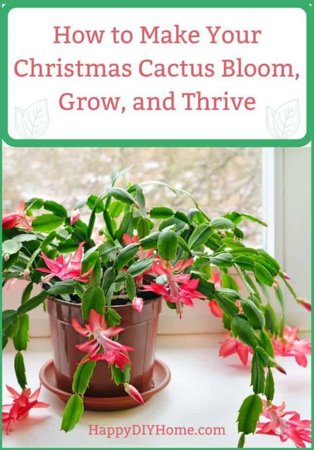 How to Make Your Christmas Cactus Bloom Grow and Thrive