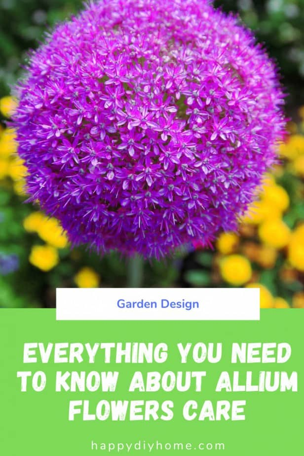 Allium Flowers Care Ultimate Growing Guide Happy Diy Home