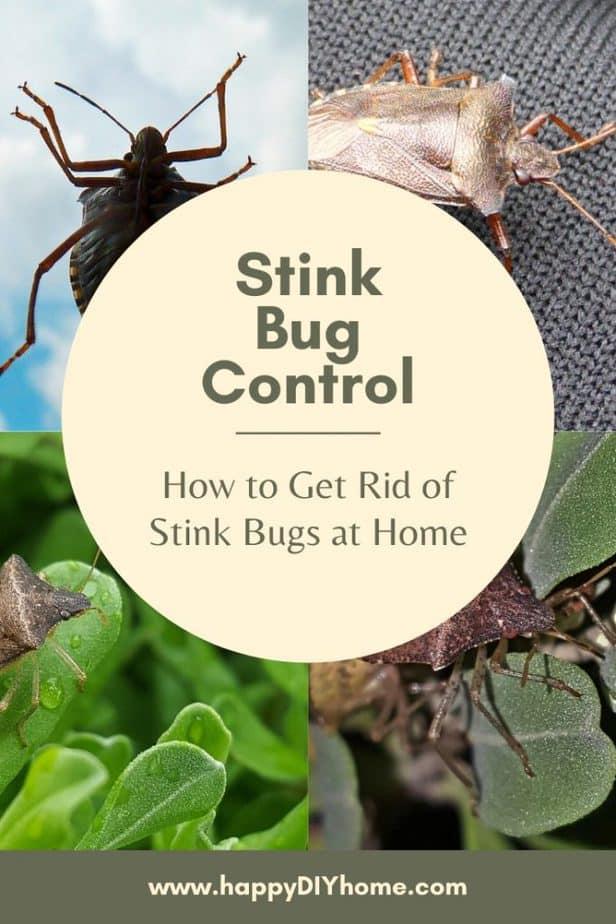 0. Stink Bug Control