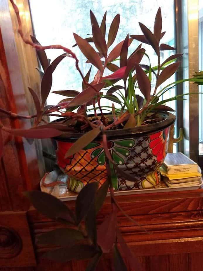 12. Talavera Plant