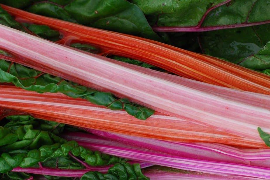 3 Rhubarb Stalks