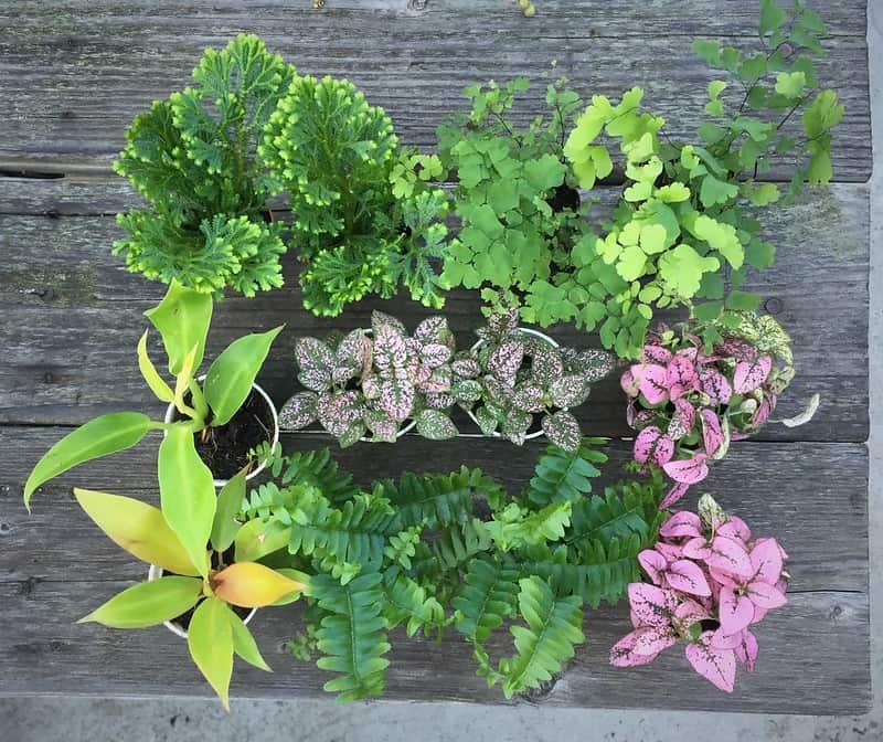 4 Terrarium Plants