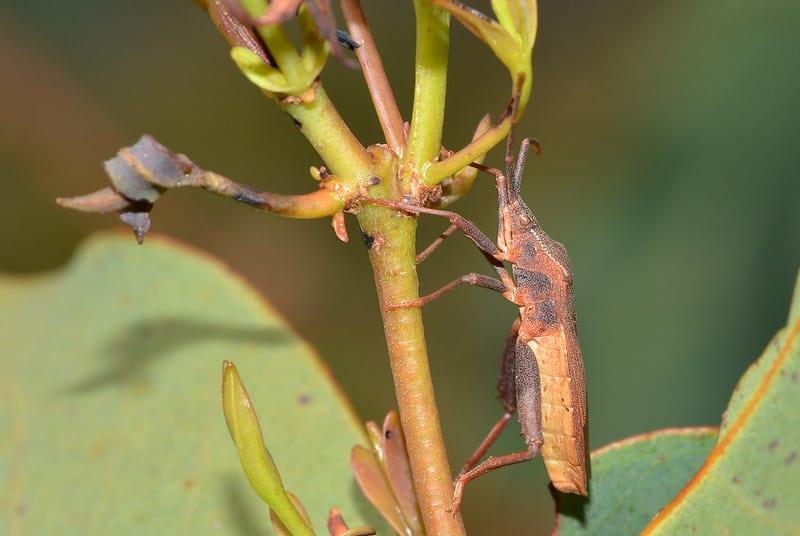 5 Bugs on Plants