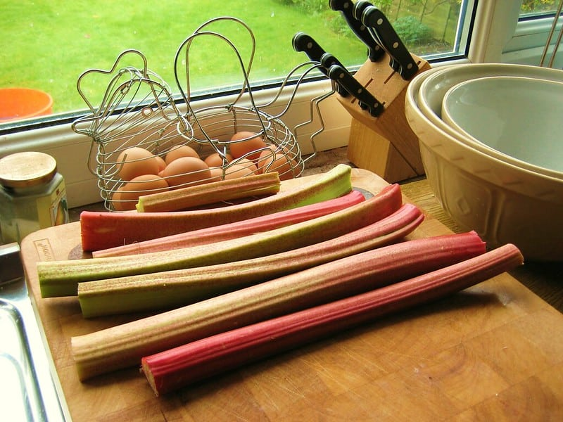 5 Rhubarb FAQs