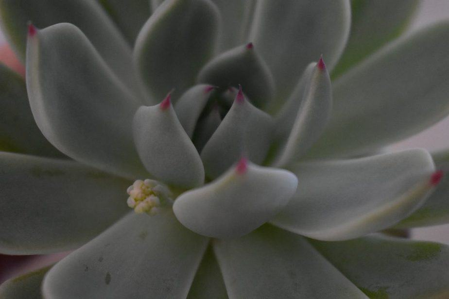 7. Blooming succulent