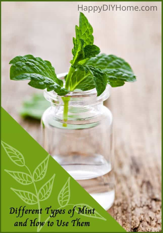 Different Types of Mint and How to Use Them Cover Photo
