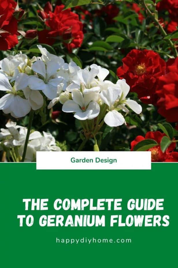 Geranium Cover Image