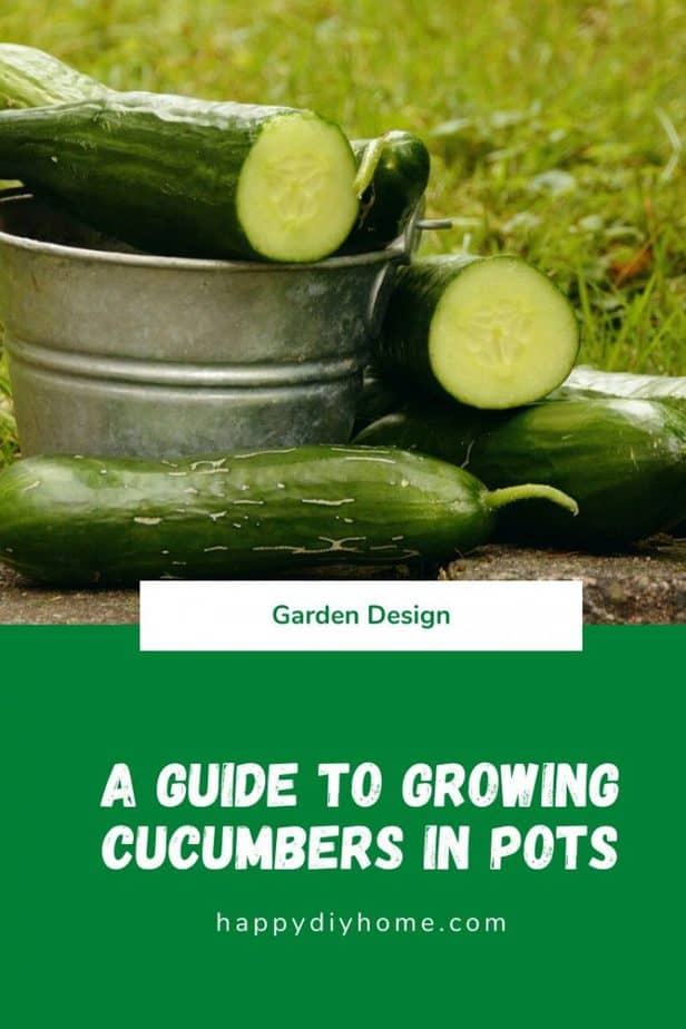 Grow Cucumbers in Pots