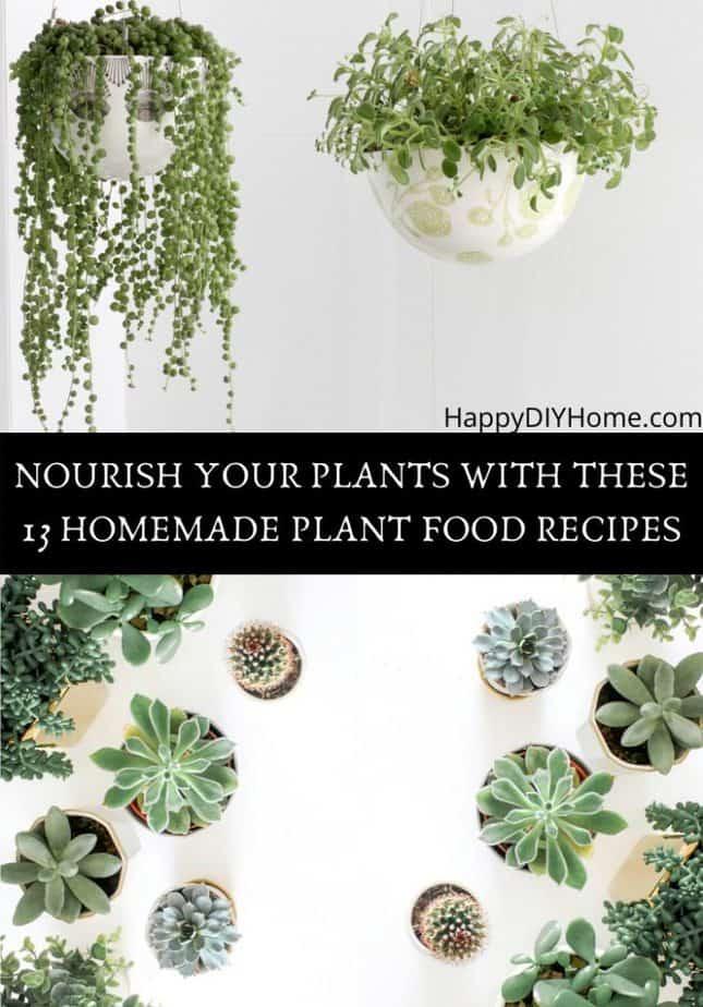 Homemade Plant Food Recipes Cover