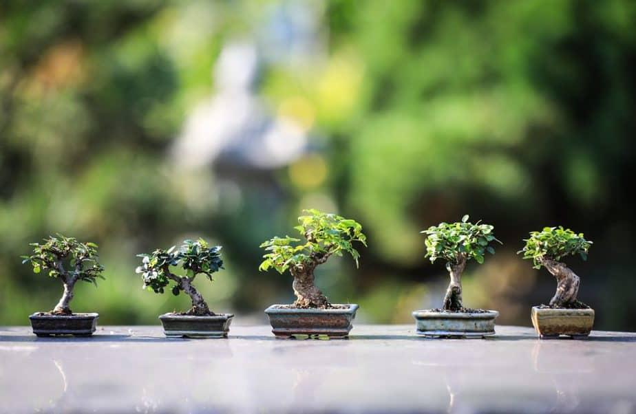 Bonsai Tree Care Guide How To Grow Bonsai For Beginners Happy Diy Home
