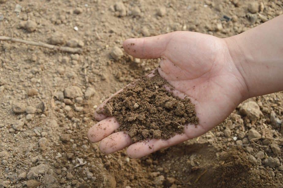Scallions5 Soil