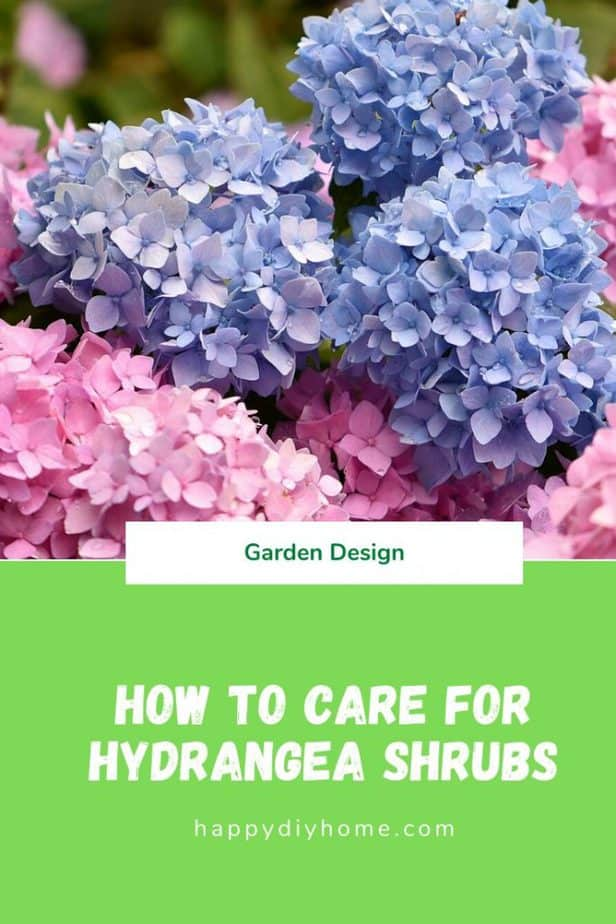 hydrangea shrubs cover image