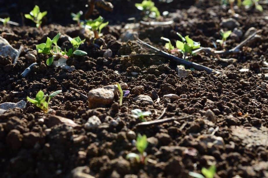 10 Soil pH Meter