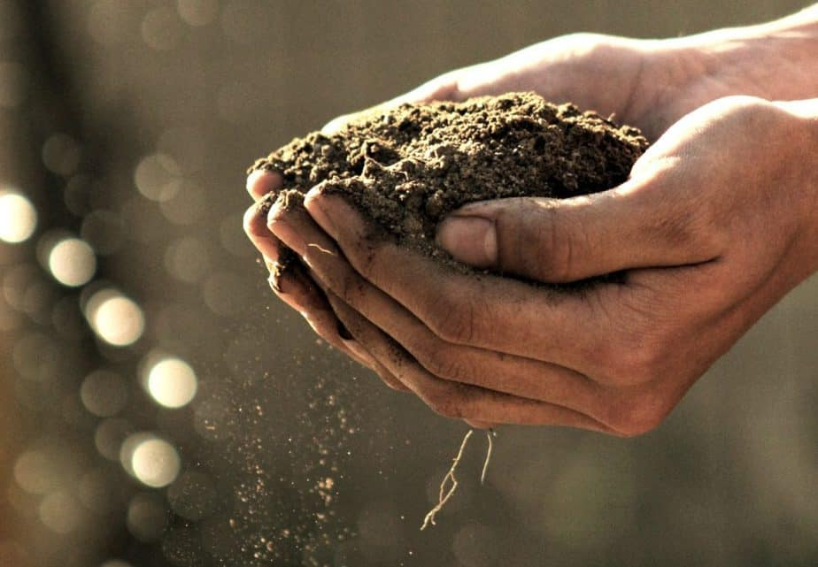 3 Hands with Soil