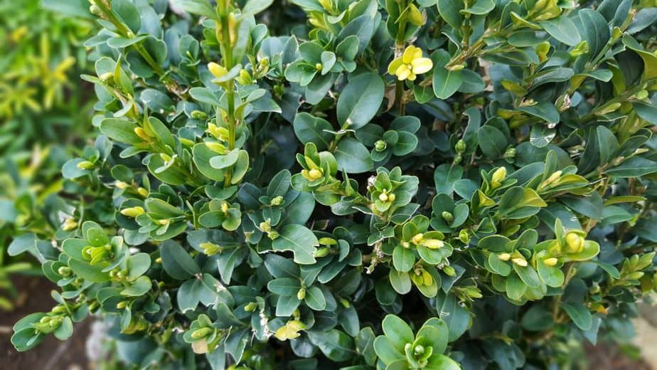 3 Healthy plants situated in favorable sites produce masses of green foliage