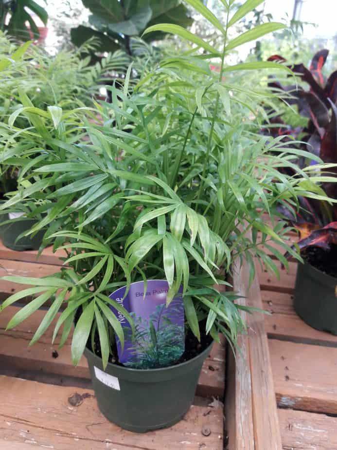 3. At garden center