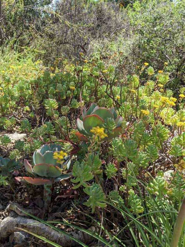 3. Flowering Cacti