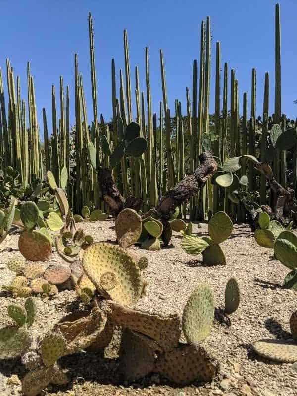 4. Various Cacti