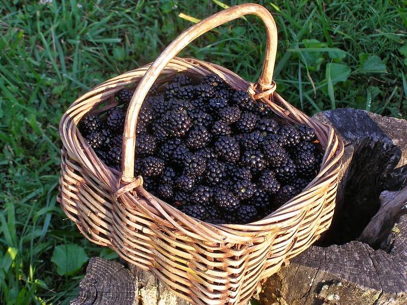 6 Blackberries