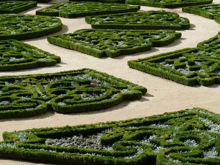 6 Boxwood can work in both formal and more natural planting schemes
