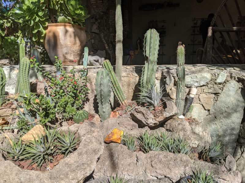 9. Cactus in Rocks