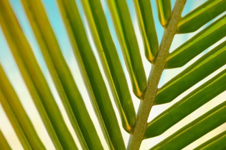 9. Outdoor leaf