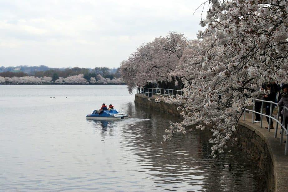 Cherry 1 Blossom Festival